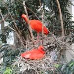 鳥の楽園!BIRDKINGDOMへ行ってきた