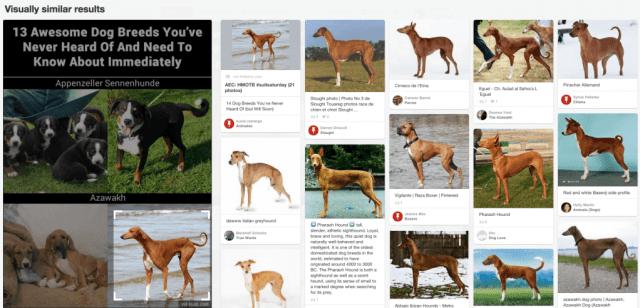 Pinterest Suche - Über die Lupe Details auf Pins entdecken