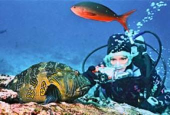 mola mola fish and diver