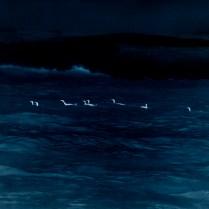 cormoranes1D