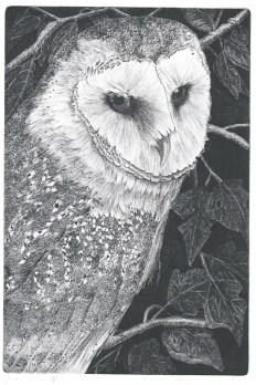 Barn owl - lijnets