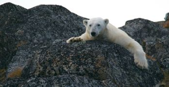 Come sarà il clima della Terra tra 10.000 anni?
