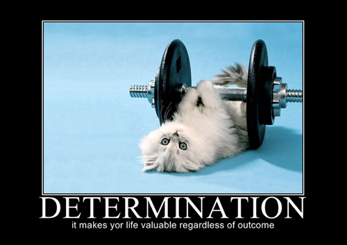 Determination - hey it's cute, and I can put whatever pictures I want =p