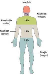 Jidhkeenna intiisa badan wuxuu ka samaysan yahay saddex atam: oksijiin, kaarboon iyo haydrojiin.