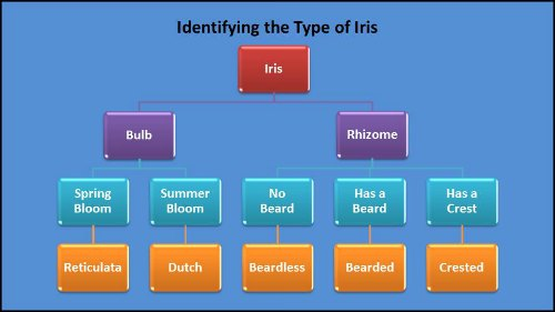 An easy way to identify the type of iris you have, iris identification