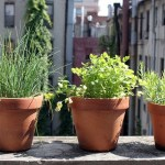 Gardening in Small Spaces with Containers
