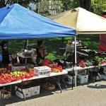 Starting a Market Garden