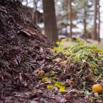 Composting 101: All About Composting for Beginners
