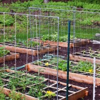 Raised Bed Gardening: The Ultimate Guide