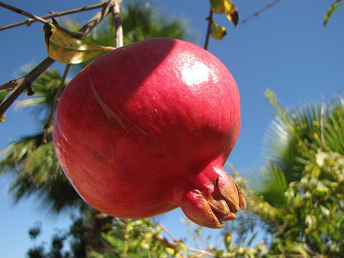 Growing Specialty Fruits