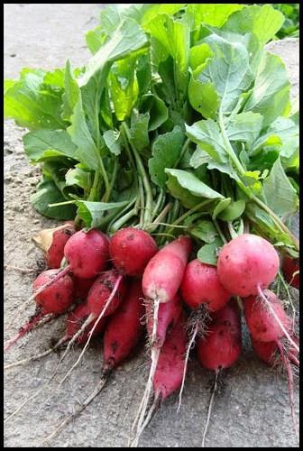 Fast-growing vegetables