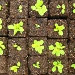 Gardening with Soil Blocks