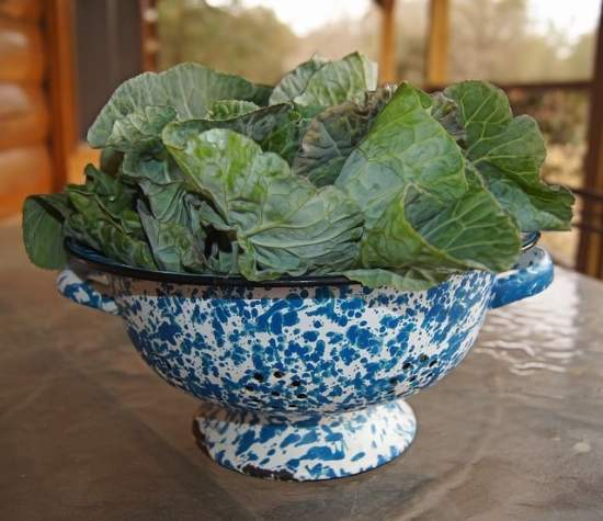 List of Cruciferous Vegetables to Grow