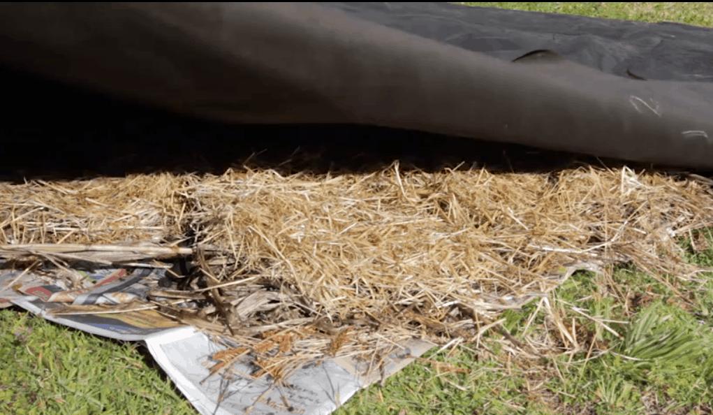 Lasagna Gardening 101: the lazy, no-till garden method that works