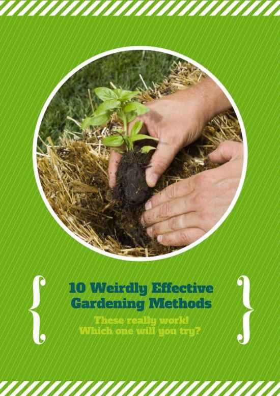 10 Weird Gardening Methods that Work!