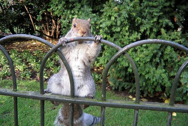 5 Humane Ways to Get Rid of Squirrels in Your Garden