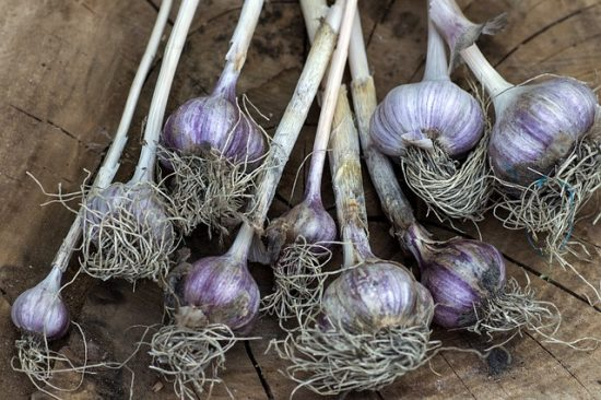 Use Fresh Garlic as an Organic Pesticide