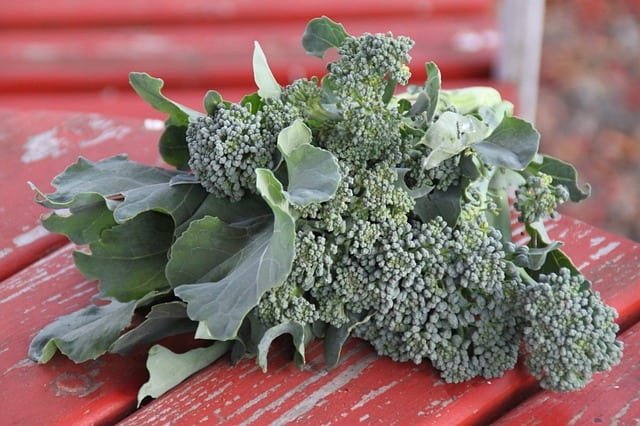 Forget sunscreen! Did you know you can use broccoli to fight sunburn?