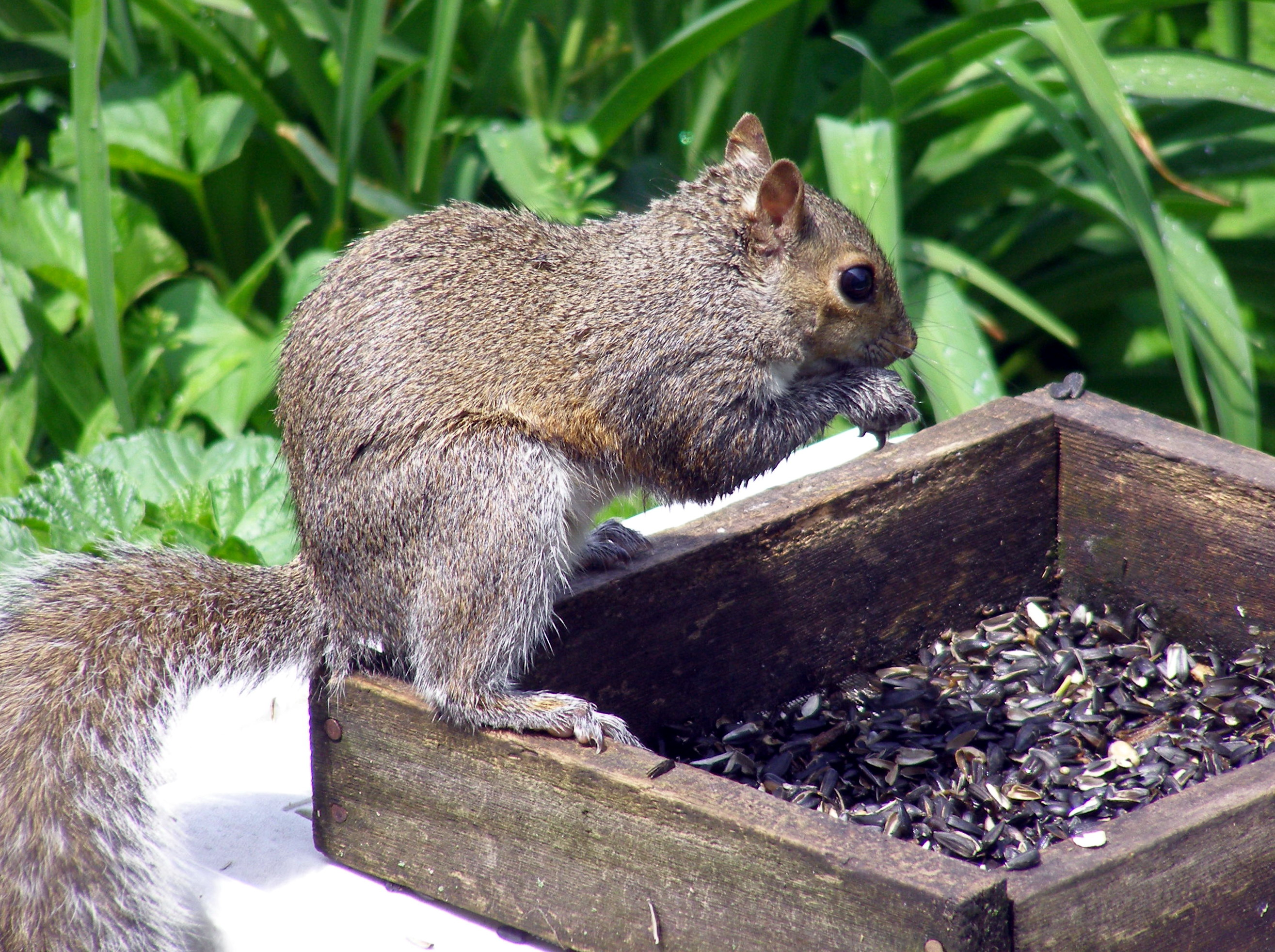 Keeping squirrels out of the bird feeder gardens alive blog - How to keep squirrels away from garden ...