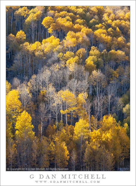 Fading Autumn Color
