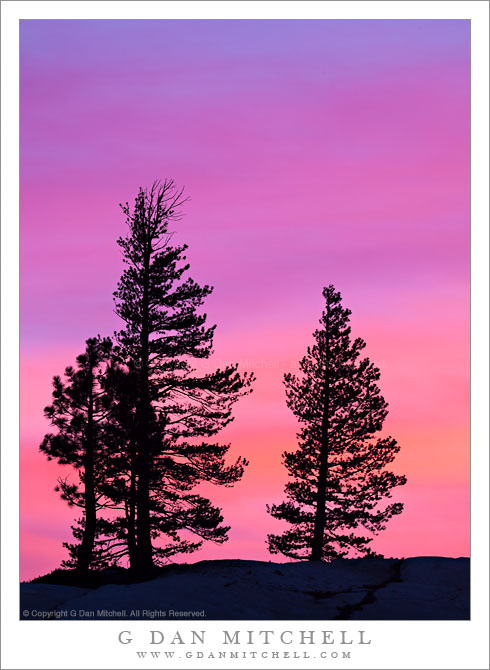Trees in Silhouette, Olmsted Point, Sunset - Trees at Olmsted Point are silhouetted agains a brillianlty colorful spring sunset sky, Yosemite National Park.
