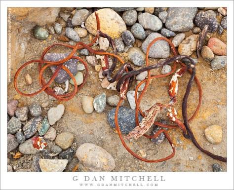 Seaweed and Pebbles, Weston Beach - Shoreline debris, including pebbles and seaweed, at Weston Beach, Point Lobos State Reserve.