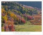 Utah Fall Color, Meadows