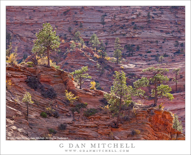 Backlit Trees and Sandstone, Afternoon - Afternoon sun back-lights trees and brush in the sandstone high country of Zion National Park, Utah
