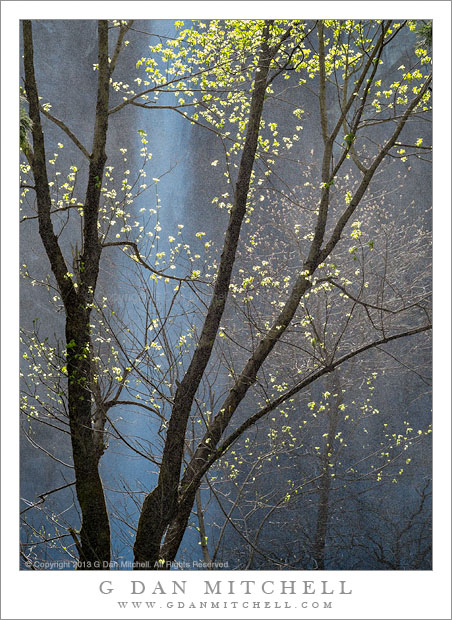 Spring Trees, Waterfall Mist
