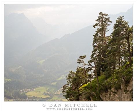 Cliff-Edge Forest Above Werfen
