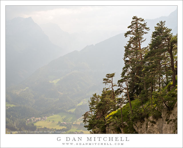Cliff-Edge Forest Above Werfen