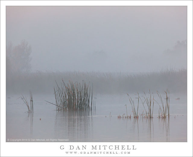 Marsh Grasses, Fog