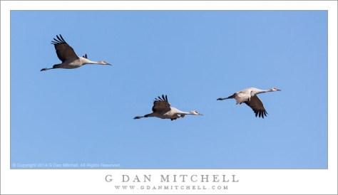 Sandhill Cranes, Blue Sky