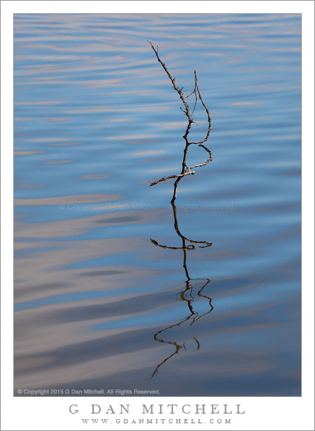 Curving Branch, Rippled Water