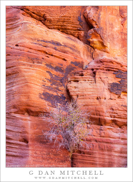Sculpted Canyon Rock, Plant