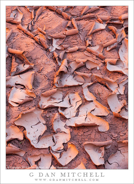 Dried Mud, Canyon Light