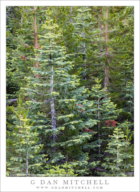 Forest, Soft Light