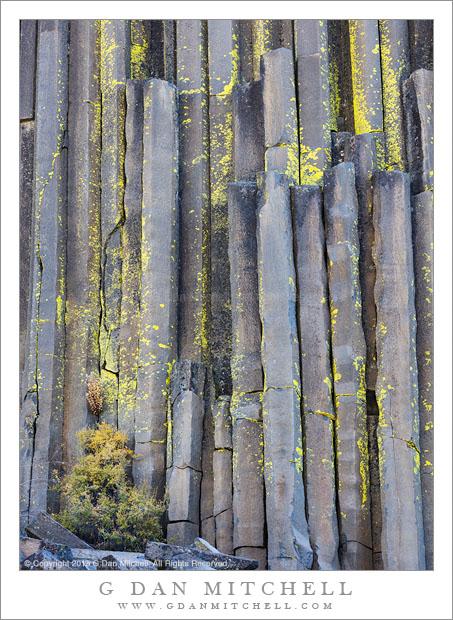 Columns and Lichen