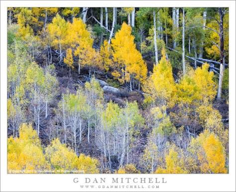 Hillside Aspen Grove