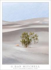 Creosote Bush, Sand, Mountains