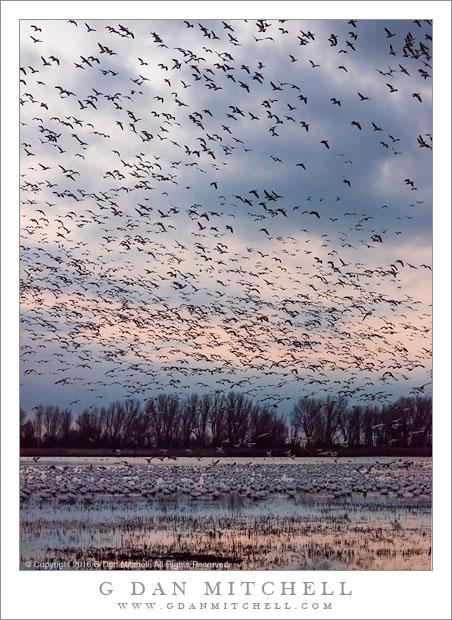 Goose-Filled Dawn Sky