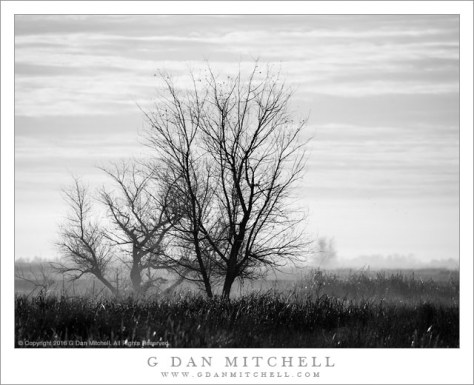 Winter Morning, Sacramento Valley
