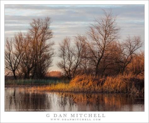 Winter Wetlands, Morning