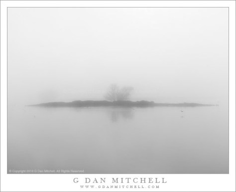 Wetlands Island, Fog