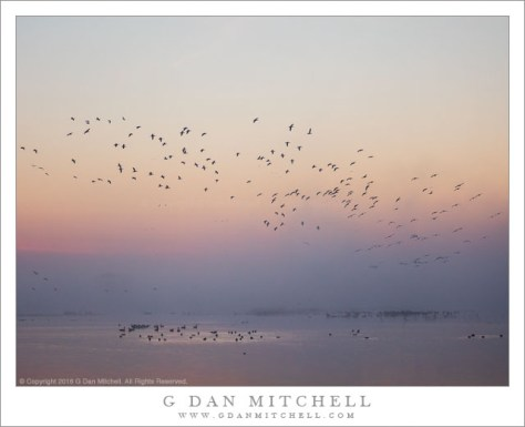 Wetlands Dawn, Arriving Birds