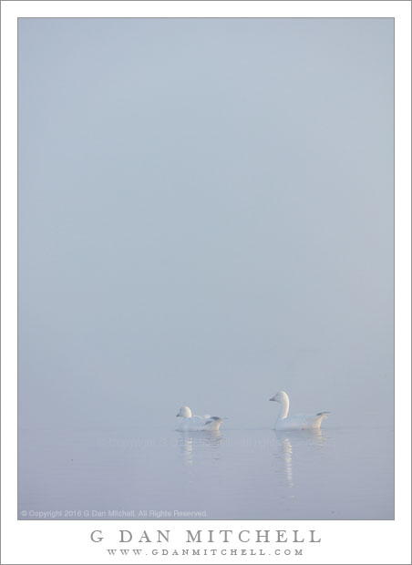 Two Geese, Reflection, Fog