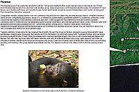 Jane Goodall Gombe Chimpanzee Blog in Google Earth