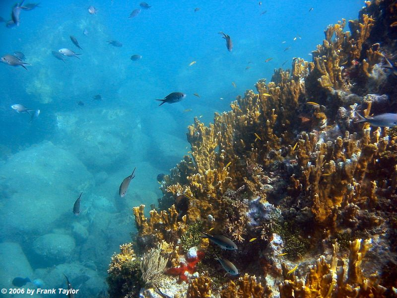 Coral Reef by Frank Taylor