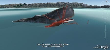 Whale Squid battle in 3D in Google Earth