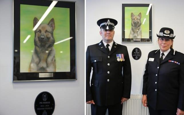 Force unveil portrait of police dog killed in action on Colwick Loop Road
